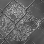 Spider's web on chain link fence